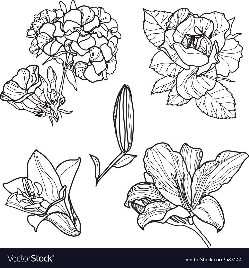 Set of floral design vector | Price: 1 Credit (USD $1)