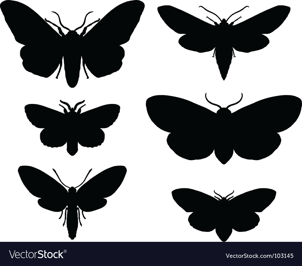 Moths vector | Price: 1 Credit (USD $1)