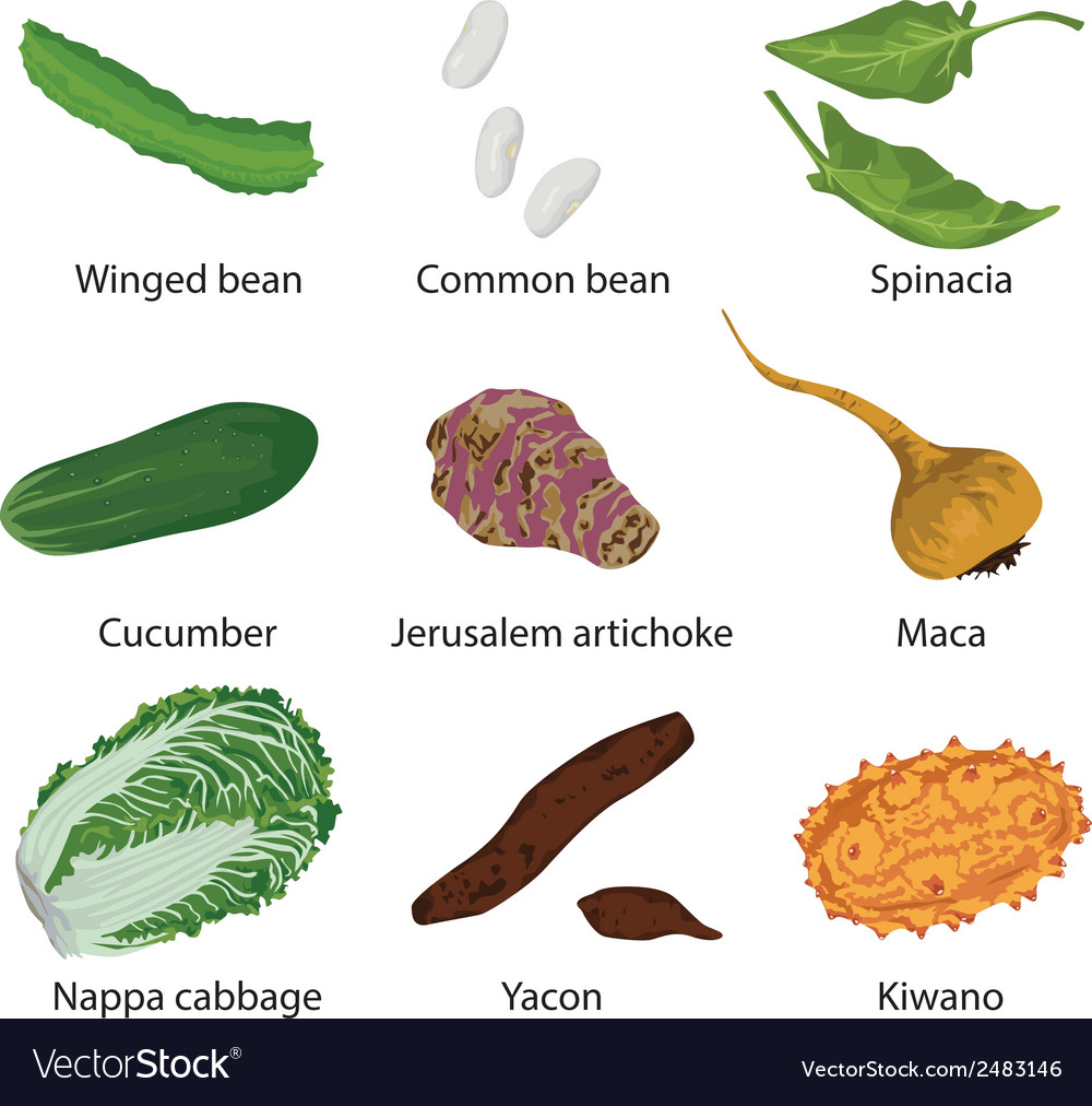 Set of different vegetables vector | Price: 1 Credit (USD $1)
