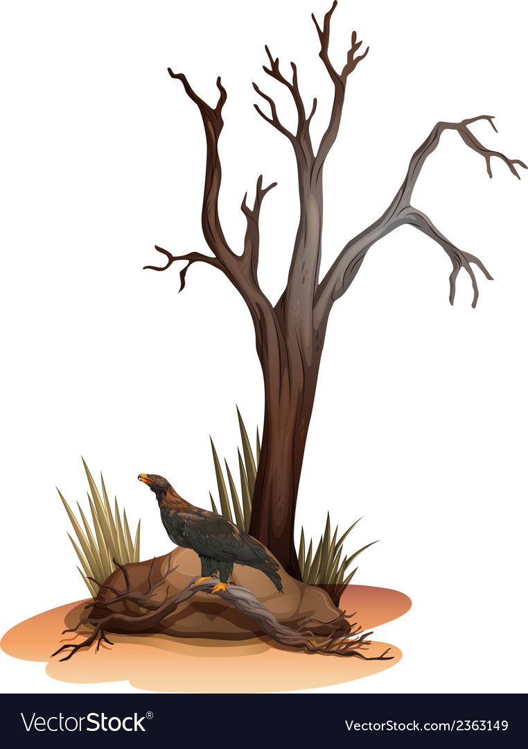 A dying tree with a wild bird vector | Price: 1 Credit (USD $1)