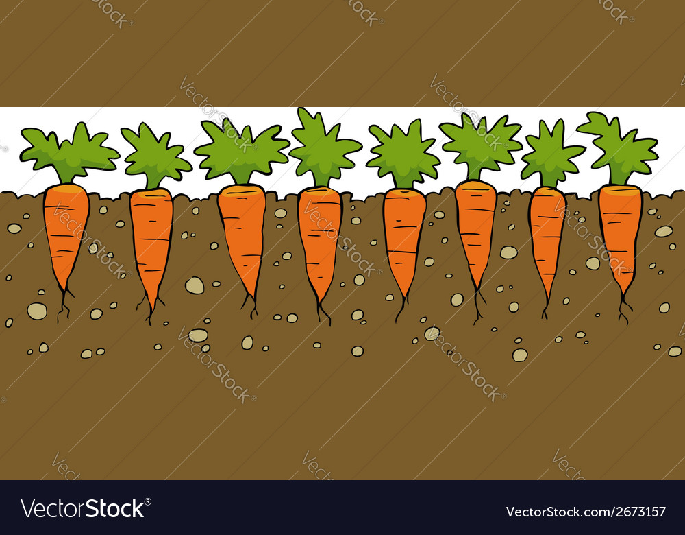 A bed of carrot vector | Price: 1 Credit (USD $1)