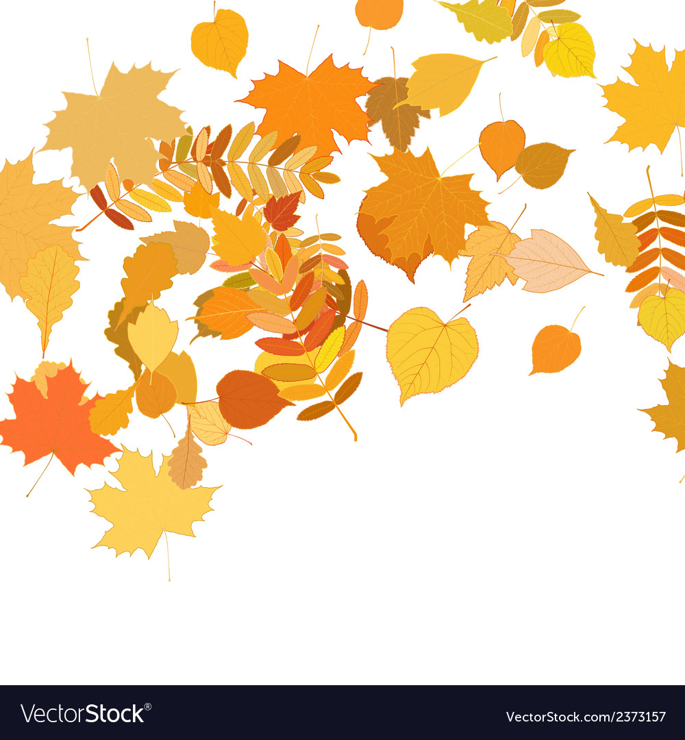 Autumn leaves falling and spinning on white vector   Price: 1 Credit (USD $1)