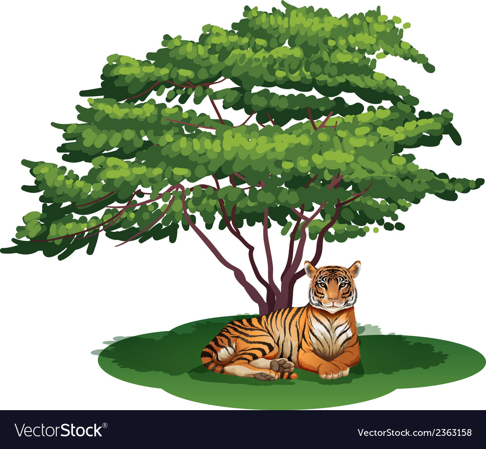 A tiger under the tree vector | Price: 1 Credit (USD $1)