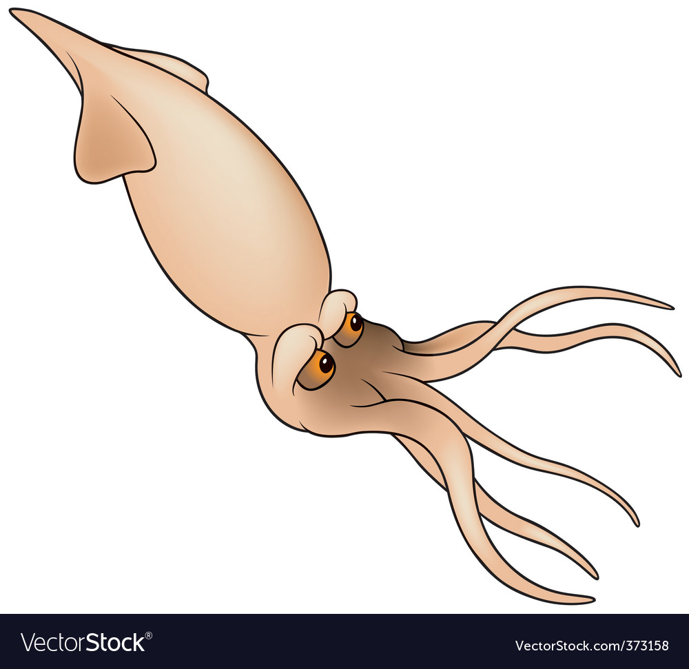 Cuttlefish vector | Price: 1 Credit (USD $1)