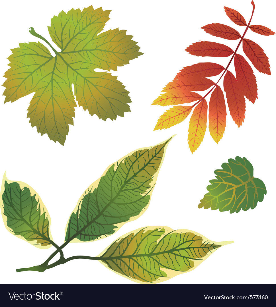Autumn leafs design elements vector | Price: 1 Credit (USD $1)