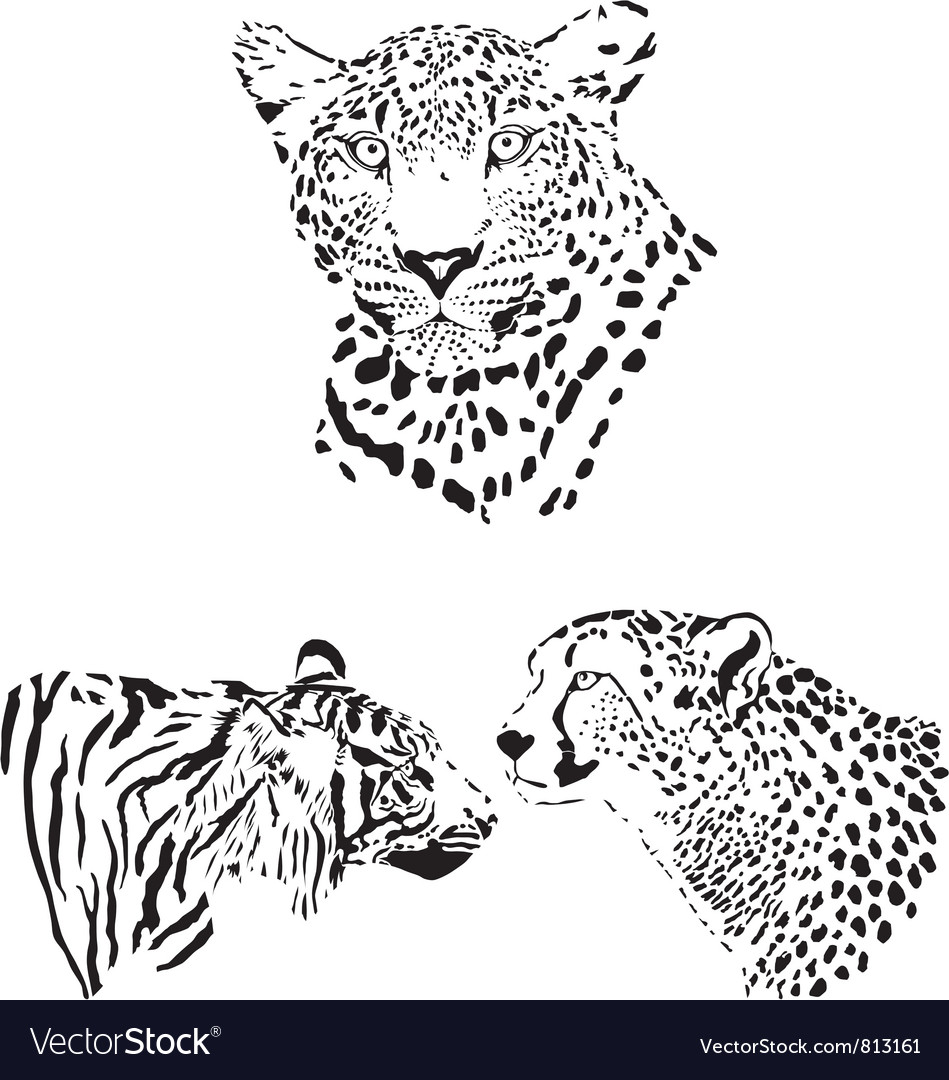 Head of cheetah leopard and tiger vector | Price: 1 Credit (USD $1)