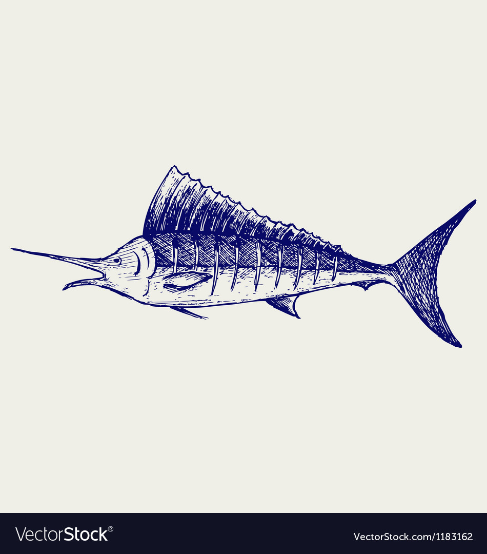 Sailfish saltwater fish vector | Price: 1 Credit (USD $1)