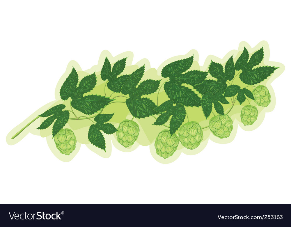 Hop branch vector | Price: 1 Credit (USD $1)