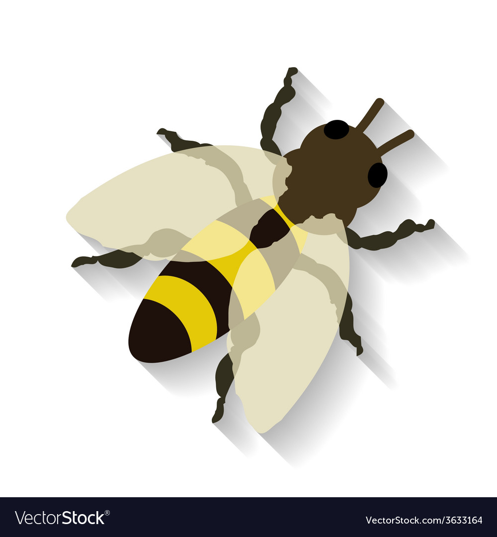 Realistic honey bee isolated on white background vector | Price: 1 Credit (USD $1)