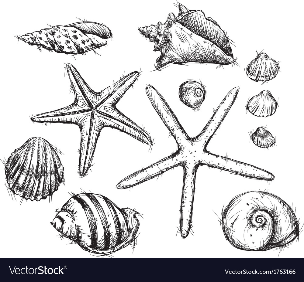 Selection of sea shells drawings vector | Price: 1 Credit (USD $1)
