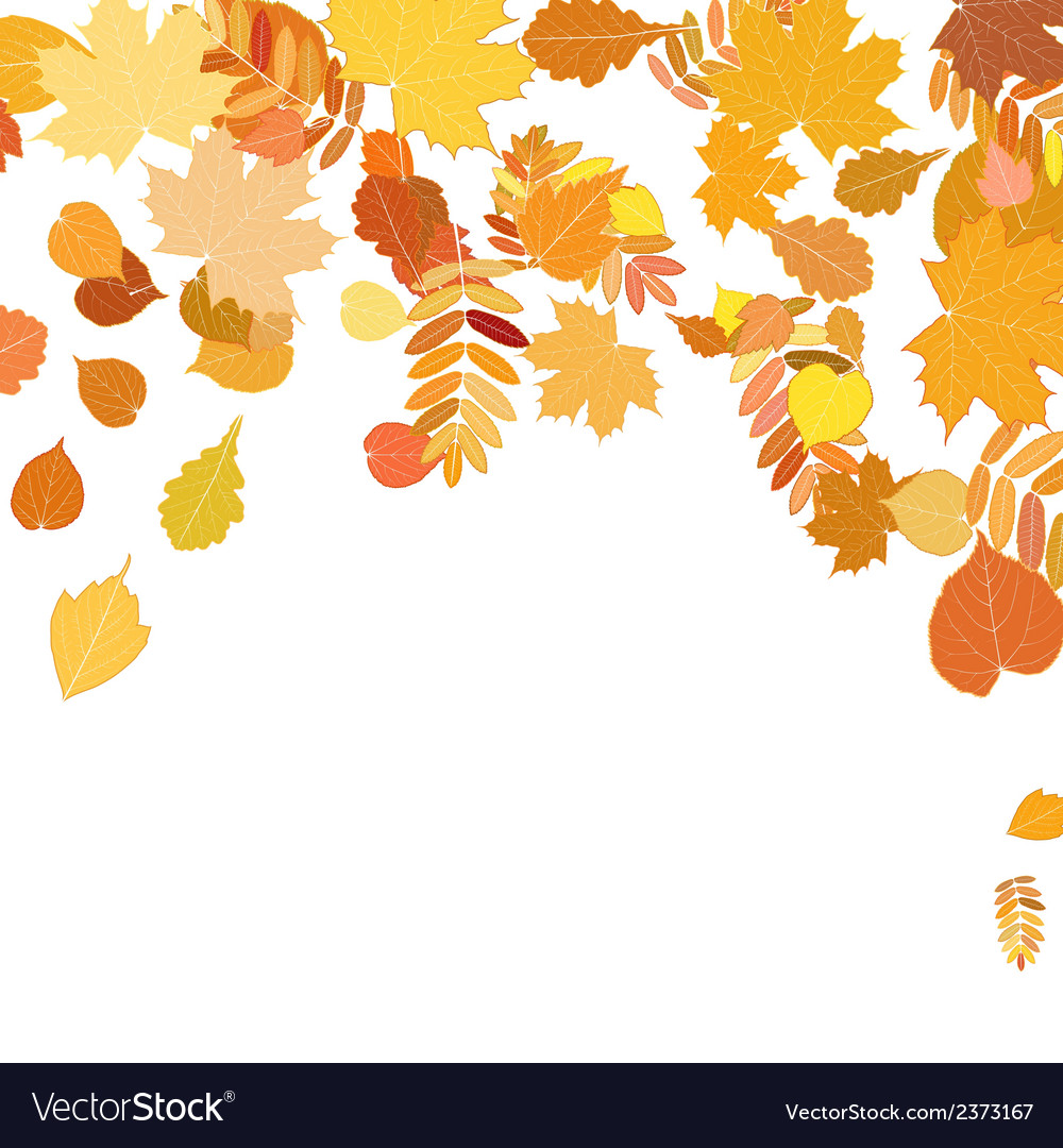 Autumn leaves falling and spinning on white vector | Price: 1 Credit (USD $1)