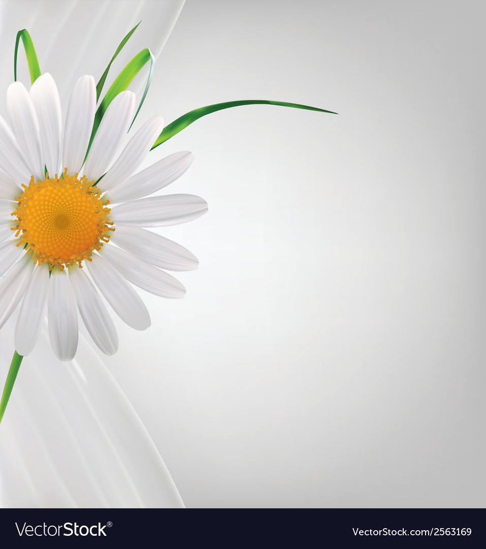 Grey abstract background with daisy and grass vector | Price: 1 Credit (USD $1)
