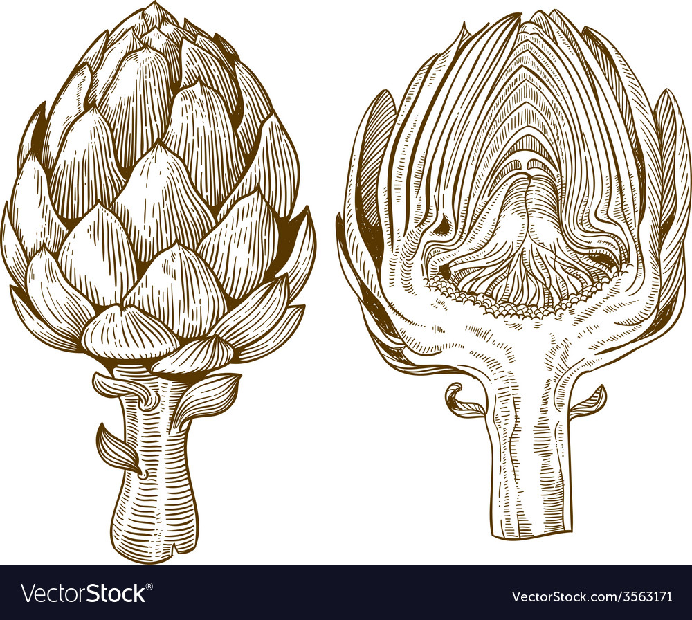 Engraving artichoke vector | Price: 3 Credit (USD $3)