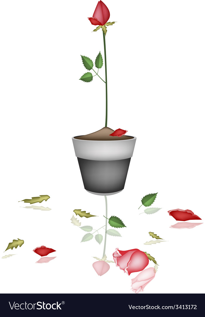 Beautiful red rose in ceramic flower pot vector | Price: 1 Credit (USD $1)