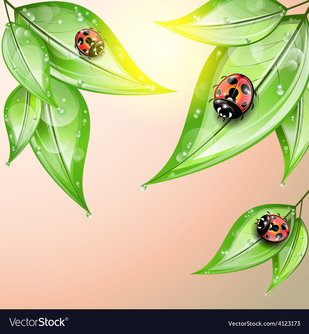 Red ladybugs on the green leaves after the rain vector | Price: 3 Credit (USD $3)