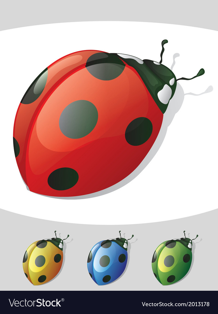 Lady bugs vector | Price: 1 Credit (USD $1)