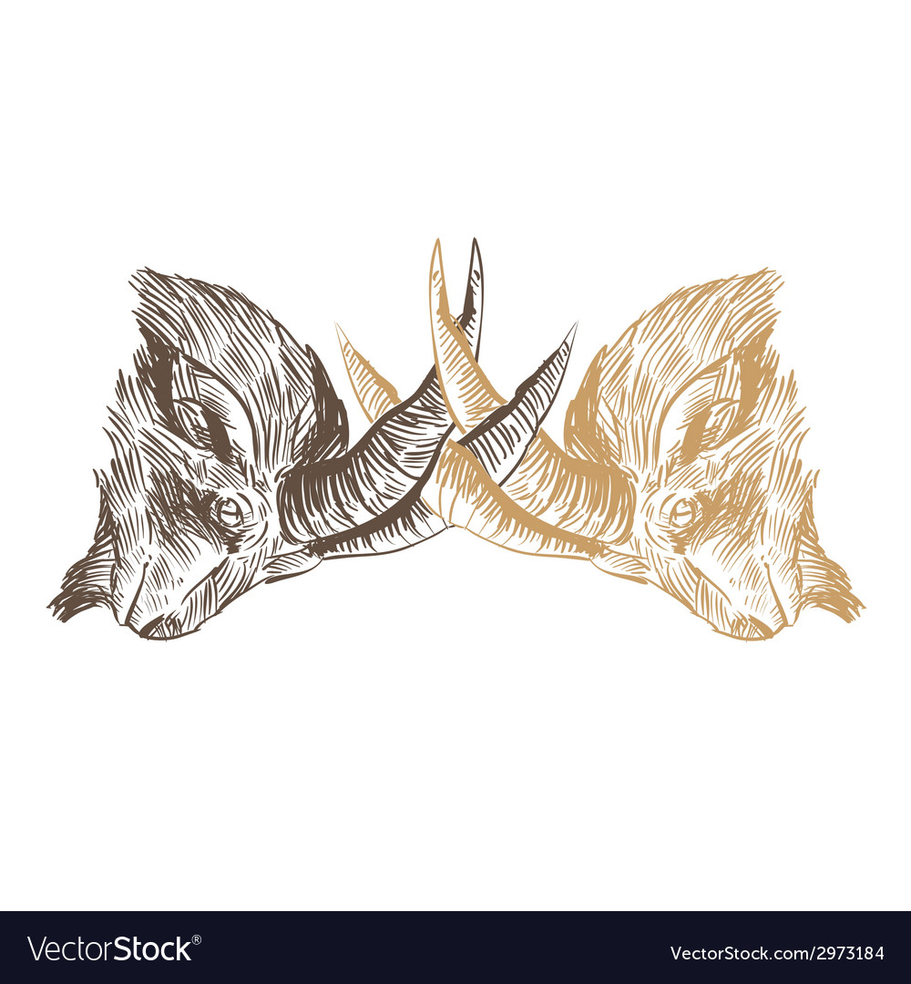 Goat heads drawing isolated vector | Price: 1 Credit (USD $1)