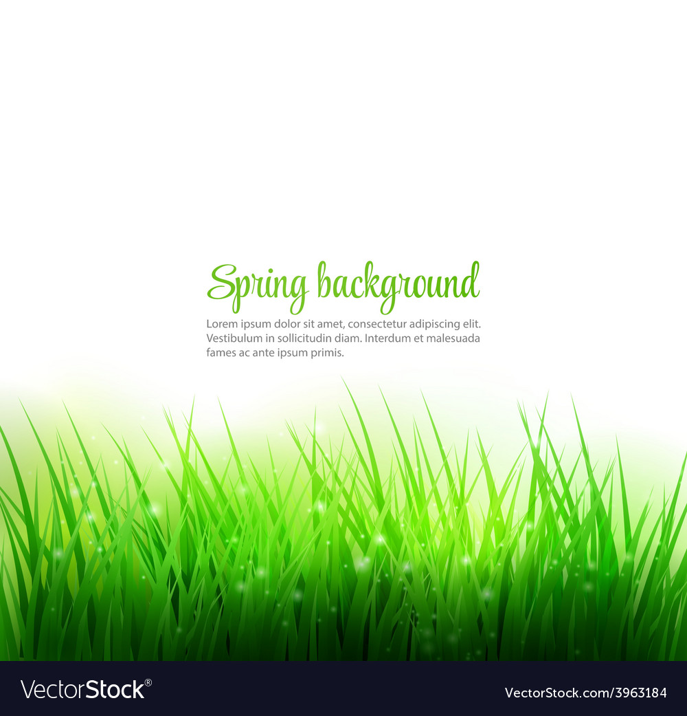 Natural green grass background vector | Price: 1 Credit (USD $1)