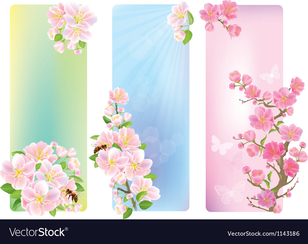 Vertical banners with a blossoming branch vector | Price: 1 Credit (USD $1)
