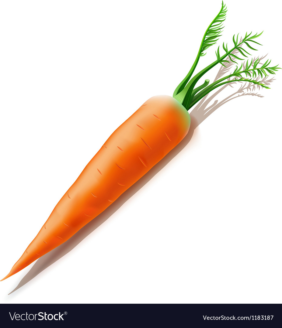 Carrot isolated on white background vector | Price: 1 Credit (USD $1)