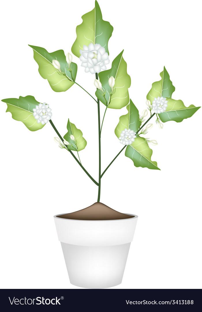 A jasmine flower in ceramic flower pot vector | Price: 1 Credit (USD $1)