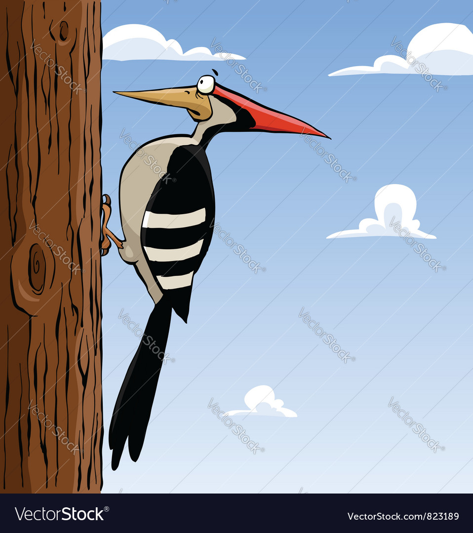 Woodpecker vector | Price: 3 Credit (USD $3)