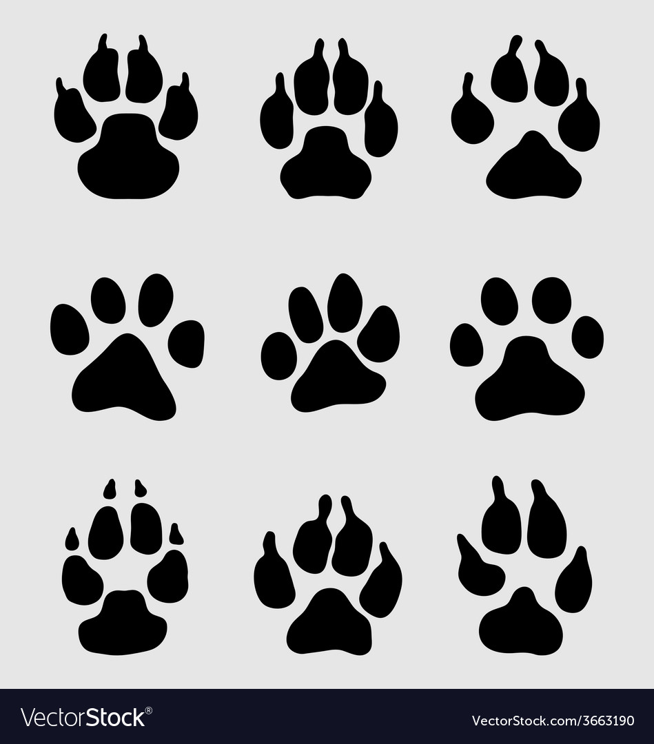 Paw of dogs vector | Price: 1 Credit (USD $1)