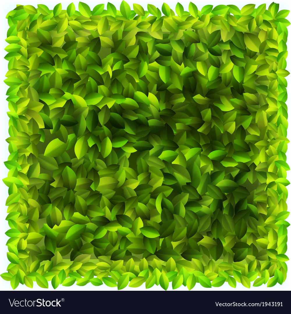 Background with fresh green leaves  eps10 vector | Price: 1 Credit (USD $1)