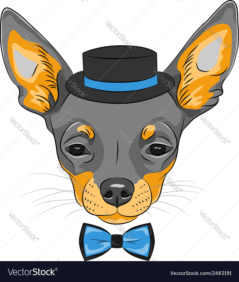 Dog chihuahua breed vector | Price: 1 Credit (USD $1)