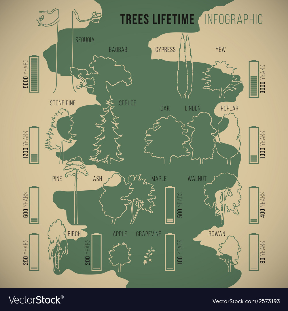 Treeinfographic vector | Price: 1 Credit (USD $1)