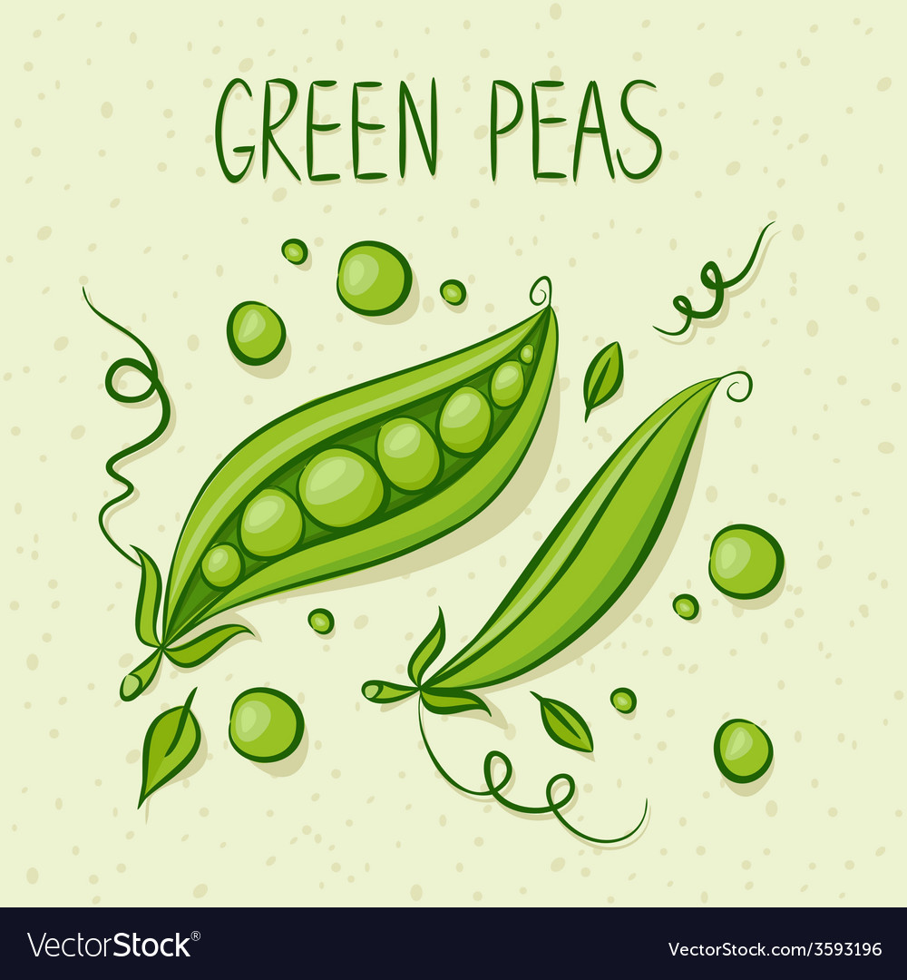 Green peas with text above vector | Price: 1 Credit (USD $1)