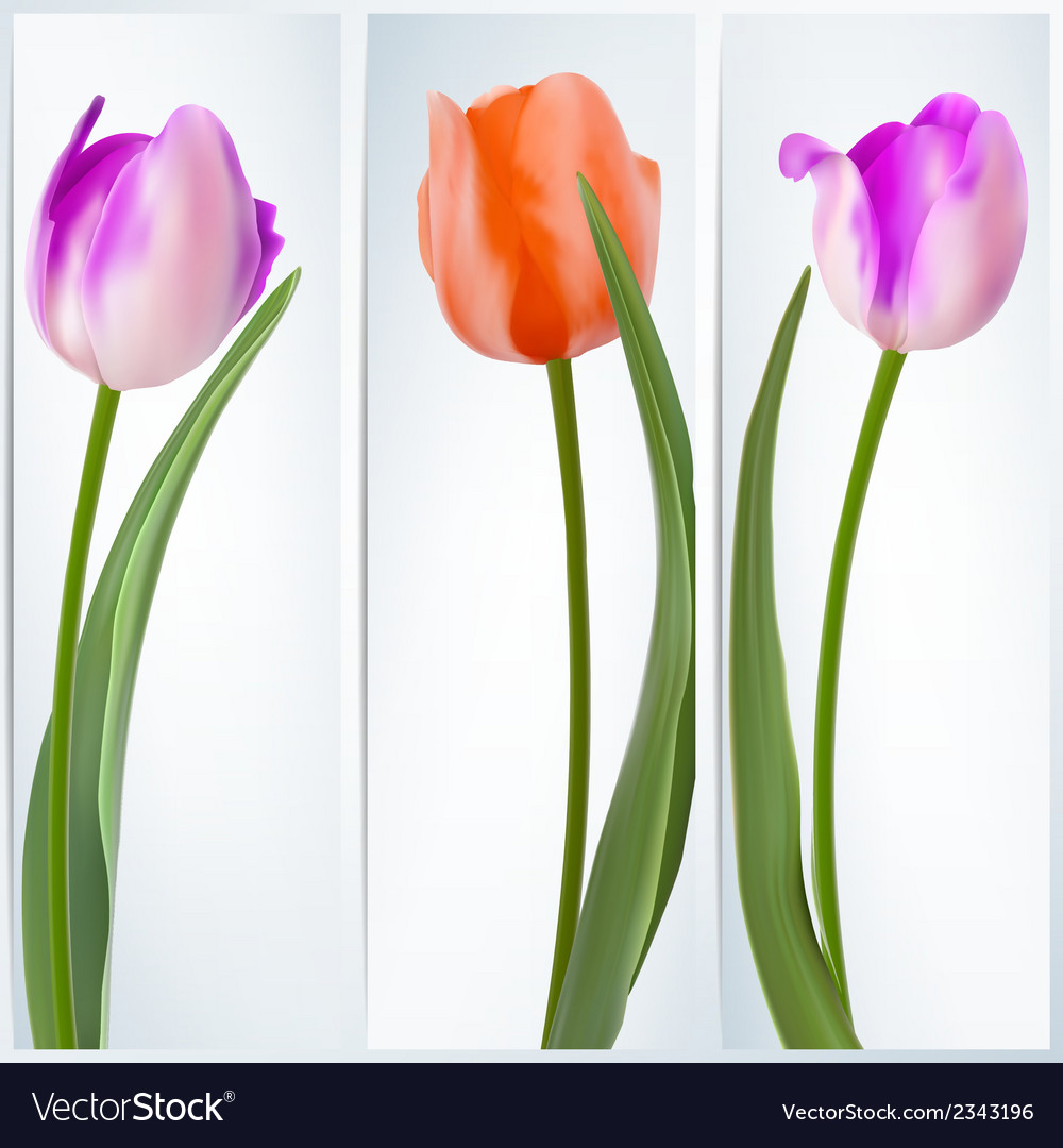 Set of banners with colorful flower eps 10 vector | Price: 1 Credit (USD $1)