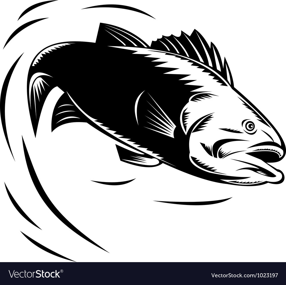 Sea bass jumping retro vector | Price: 1 Credit (USD $1)