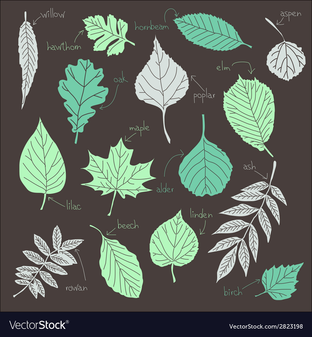 Set of leaves vector | Price: 1 Credit (USD $1)