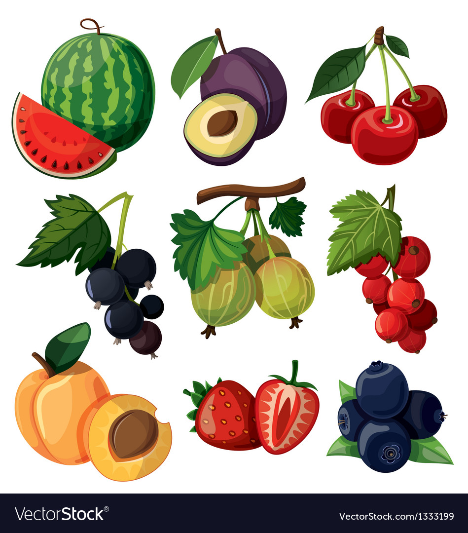 Set of isolated berries vector | Price: 3 Credit (USD $3)