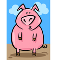 Cartoon of farm pig vector