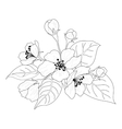 Apple tree flowers and leaves contours vector