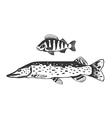 Fish predators set vector