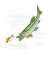 Predatory-fish-pike vector