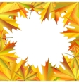 Frame of maple leaves vector