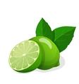 Fresh limes vector
