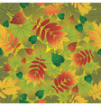 Seamless autumn leaves vector