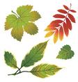 Autumn leafs design elements vector