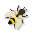 Realistic honey bee isolated on white background vector