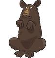 Baribal american black bear vector