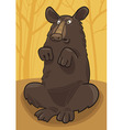 Baribal american black bear vector