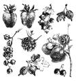 Hand dawn berries vector