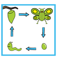 Butterfly life cycle cartoon vector