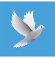 Flying dove isolated on blue vector