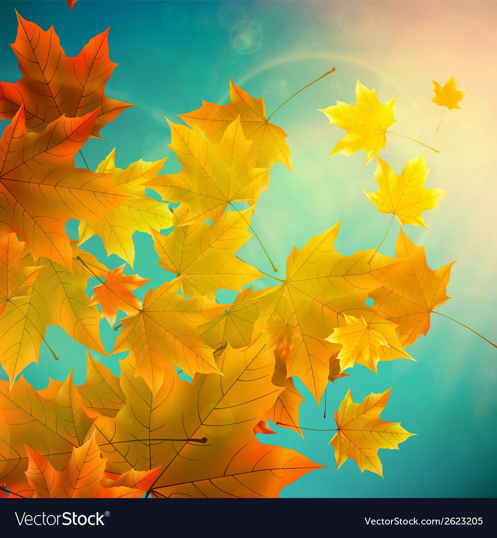 Beautiful autumn leaves vector | Price: 1 Credit (USD $1)